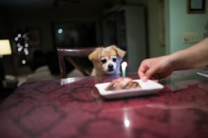 dog sitting in front of table